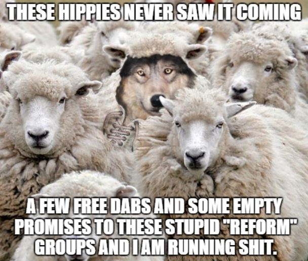 wolf.sheeps.neversawitcoming.1